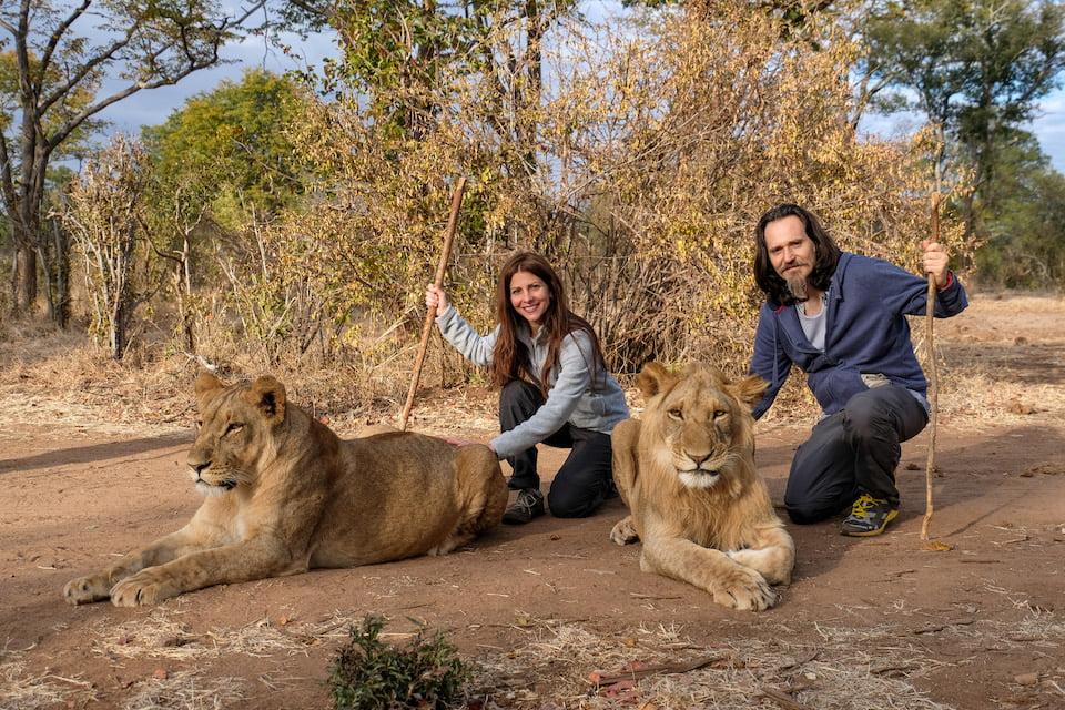 Accarezzare i leoni